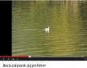 Kedvencünk a Tisza
