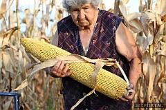 Bukta Imre - GMO fantázia